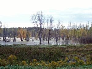 Autumn swamp on way to work 09 edited