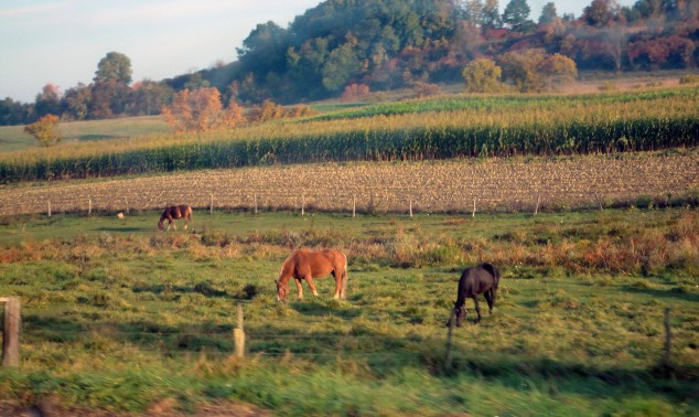 horses in a field edited