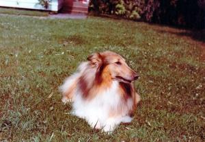 Lassie 1977